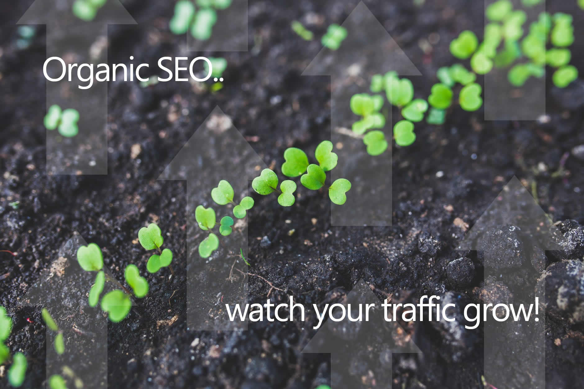 Seedlings to represent organic search engine positioning